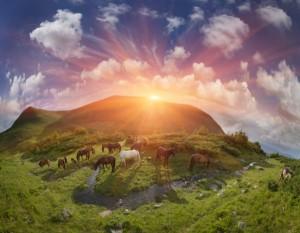 pastures-1-600x467
