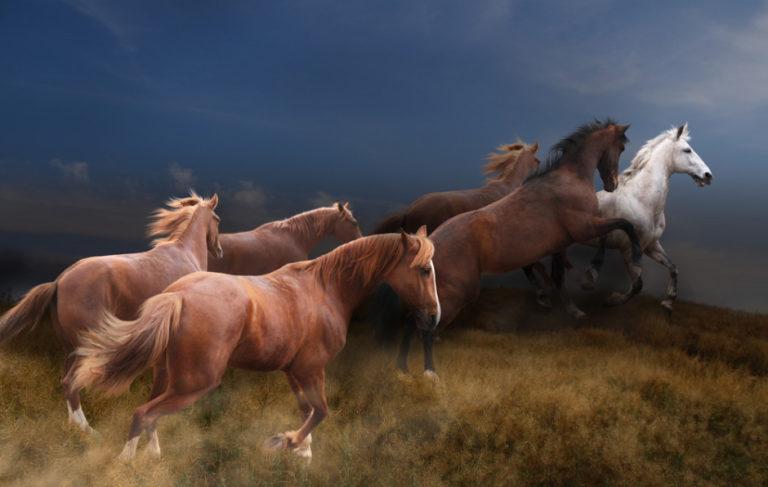 wild-horses-2-768x487